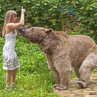 Дрессировка медведя :: Вячеслав Касаткин