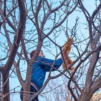 Спасение рыжего котейки... :: Елена Васильева