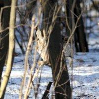 Заяц побегаец! :: Борис E