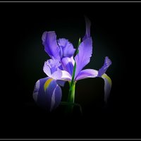 """из серии""""Весны прекрасные мгновения"""". :: Boris Gantselevich"""