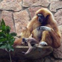 Капризный малыш и строгая мама :: GaL-Lina .