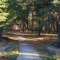 Дорога в лес :: °•●Елена●•° Аникина♀