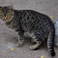 Кошка :: Дмитрий Глушко