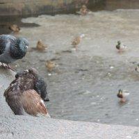 птичий базар :: Евгения Чередниченко