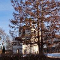 могучая лиственница на территории монастыря :: Валентина. .