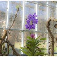 В ботаническом саду 5 :: Jossif Braschinsky