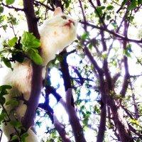 Весной даже блондинок тянет на цветущие деревья. :: Владимир Ростовский