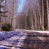 Весна идет, весне дорогу :: Татьяна Ломтева