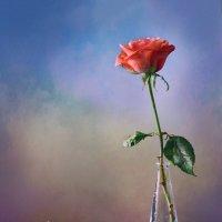 С розой и ракушкой :: Юлия Эйснер