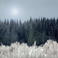 Морозно :: Валерий Талашов