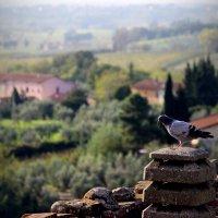Винчи. Флоренция :: Andrey Panoff
