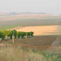 Виноградарство набирает силу! :: Валерий Лазарев