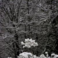 первый снег :: Елена Игнатенко