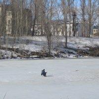15 марта,Саратовская область :: tgtyjdrf