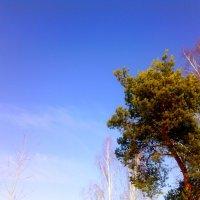Весна идёт!!! :: Милагрос Экспосито