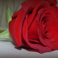 8-ми мартовские цветы)))) :: Lilek Pogorelova