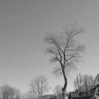 оденкое дерево :: Константин Васильев