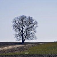 Самотність... :: Наталия Рой