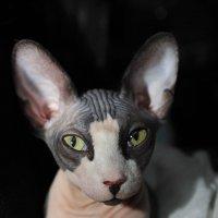 Что смотришь? Кошек не видел? :: Виктор (victor-afinsky)
