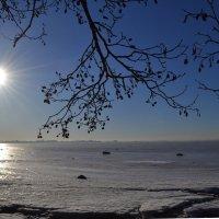 Финский залив :: Наталья Левина
