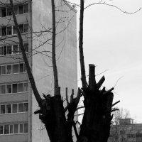 Городское  дерево. :: Валерия  Полещикова