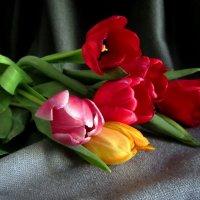 Мартовские тюльпаны :: Сергей Карачин