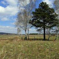 На лесной опушке. :: nadyasilyuk Вознюк