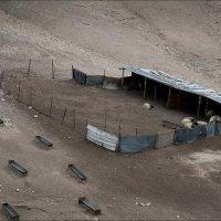 Хозяйство бедуина :: Юрий Васильев