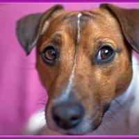 мечтают ли собаки ? :: Сергей