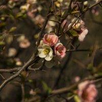 весна! :: Svetlana AS