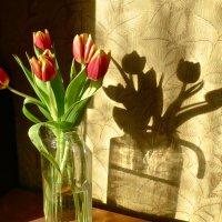 тюльпаны со своей тенью :: Елена