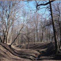 Весна в Удельном парке :: Вера