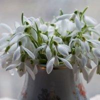 Скажите, ведь правда что это весна ? :: Ольга Винницкая