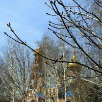 весна священная :: Лидия кутузова