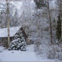 последнее снежное воскресенье :: liudmila drake