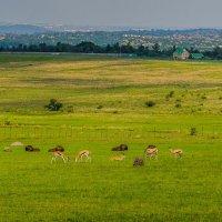 Кусочек Рая в этом бренном мире. Африка. :: Ирина Краснобрижая