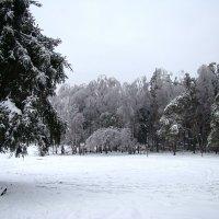 Ледяной лес. :: юрий