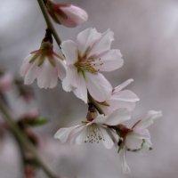 Весна идет (19-й день весны) :: Александр Грищенко