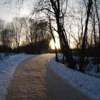 зимняя дорога :: linnud