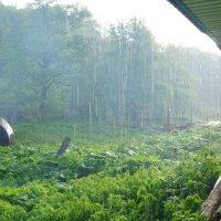 Летний дождь :: Serega Денисенко