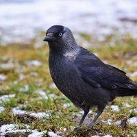 Птица :: Антон Леонов