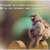 20 марта-всемирный день воробья :: Андрей Поляков