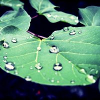Капли дождя :: Мария Ралдугина