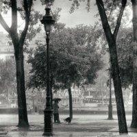 шел прошлогодний дождь :: Vladimir Zhavoronkov