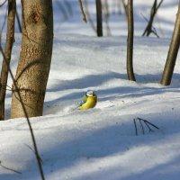 Март в лесопарке :: Ната Волга