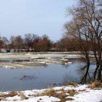 Судьбою чувств весенняя река... :: Лесо-Вед (Баранов)
