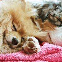 Спят усталые... :: Диана