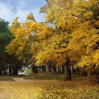 октябрь :: георгий петькун