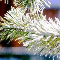 Зима :: Дмитрий