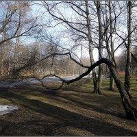 Удельный парк весной :: Вера